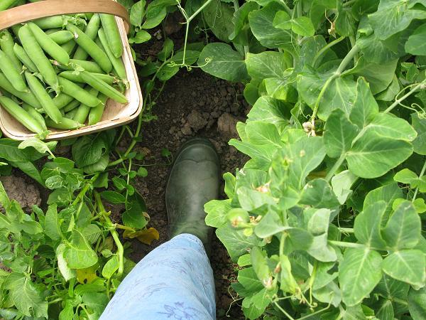 feet in peas