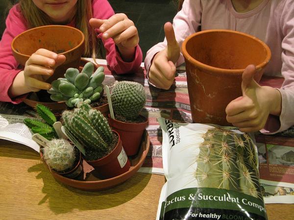 start of cactus garden