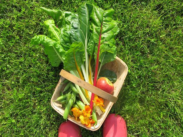 kitchen garden goodies