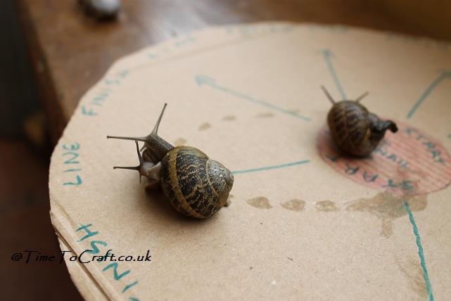 snail race wrestling