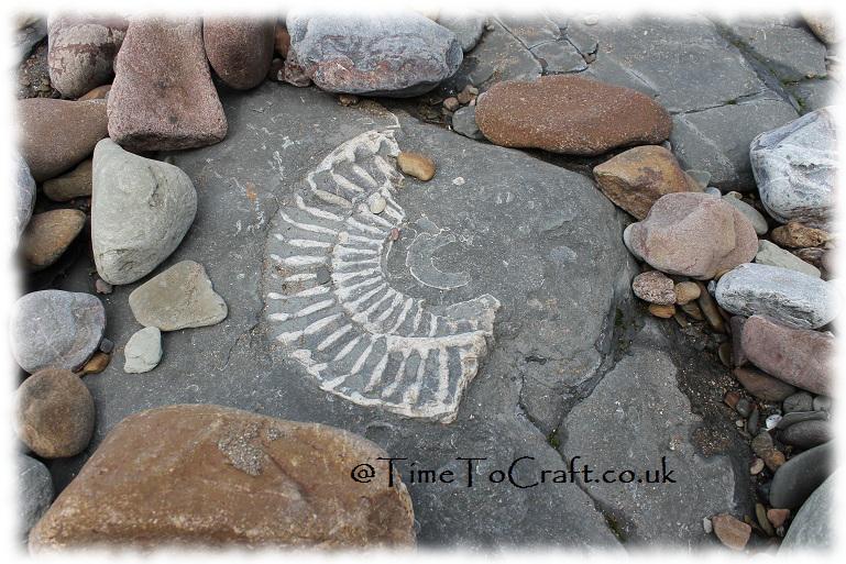 Ammonite1