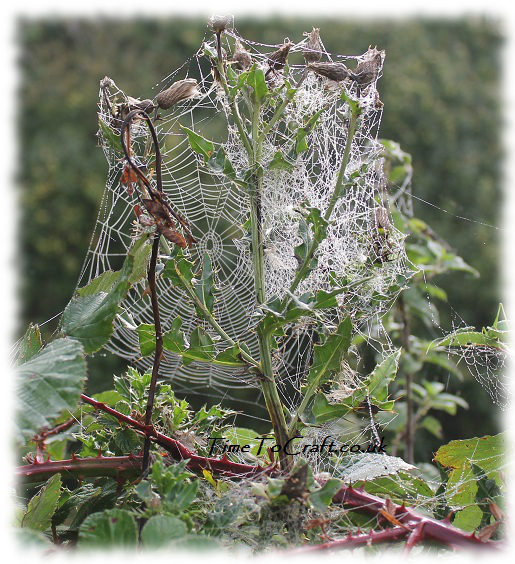 bramble and web