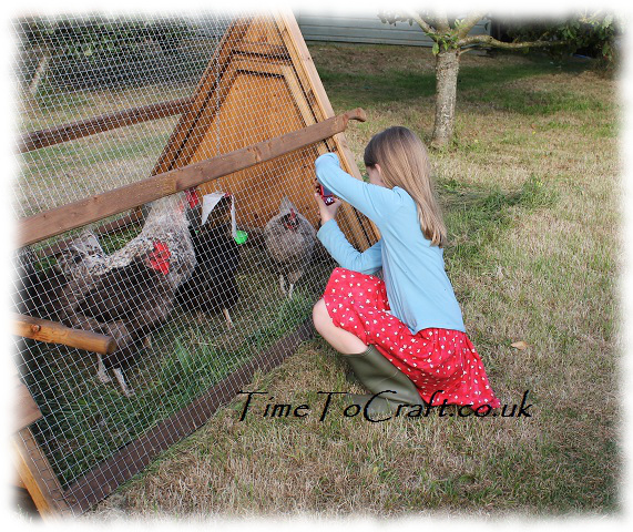 taking photos of hens