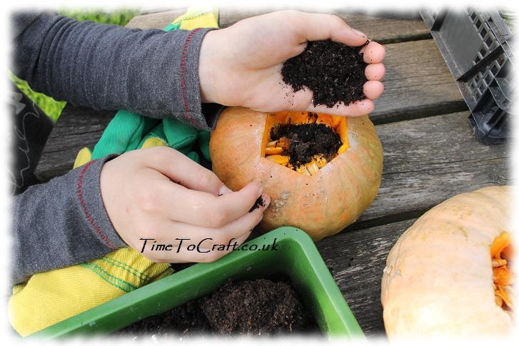 soil in squash