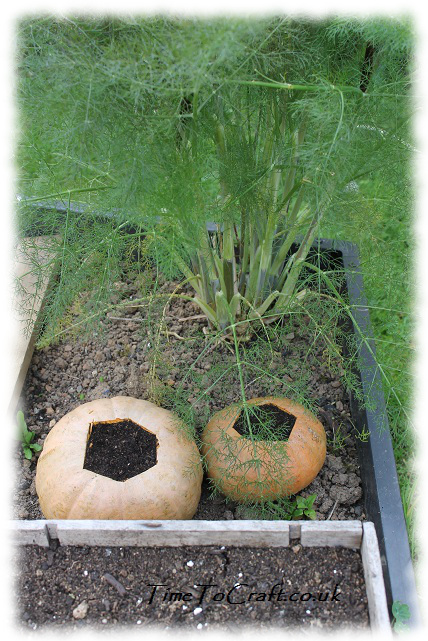 squashes in raised bed
