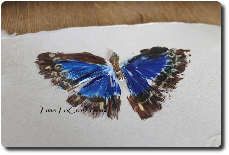 painted feather butterfly side