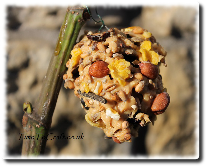 peanut and seed pine cone feeder on fig tree
