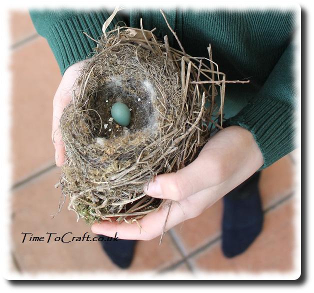 dunnock nest in hands