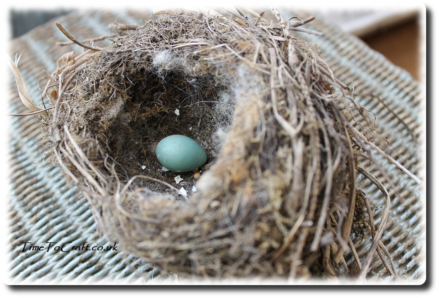 dunnock nest