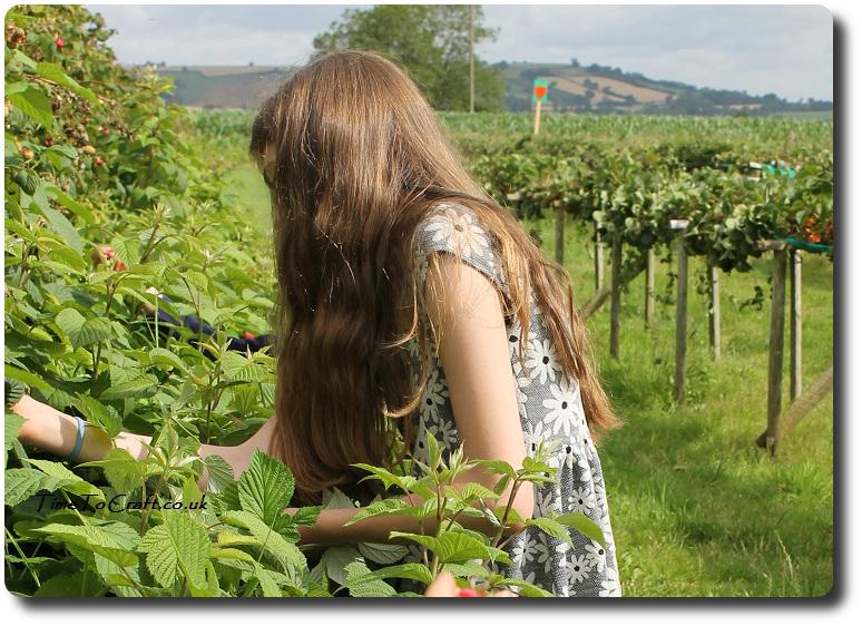aj picking raspberries