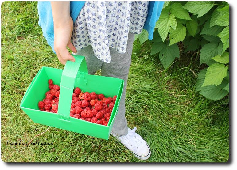 basket of raspberries PYO