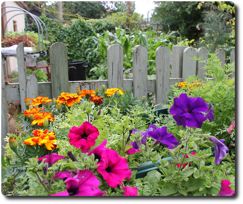 Tips on growing vegetables and salad in a small area for Small kitchen garden