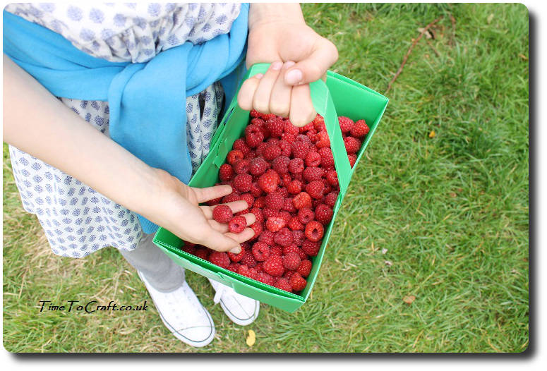 raspberries from PYO