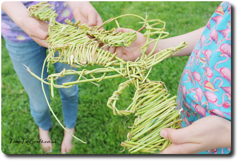 holding the willow weaving bugs
