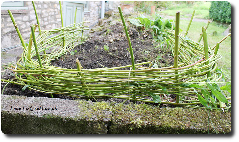 stage 1 willow edging