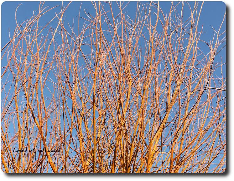 Orange willow against blue sky