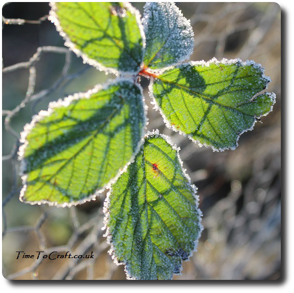 stain glass frosted blackberry leaves