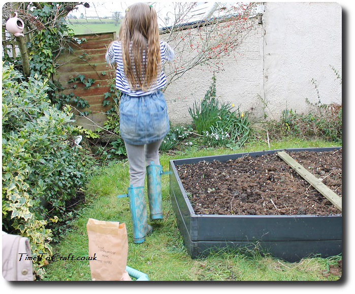 planting broad beans and Totoro dance
