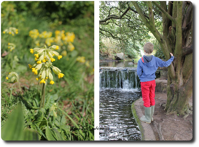cowslip and water