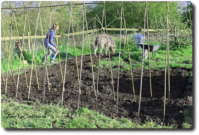 children gardening - weeding the kitchen garden bean poles