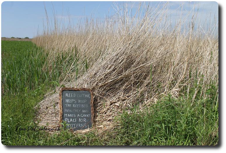 reed maintenance