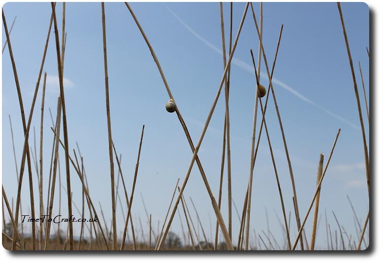 snails on reeds