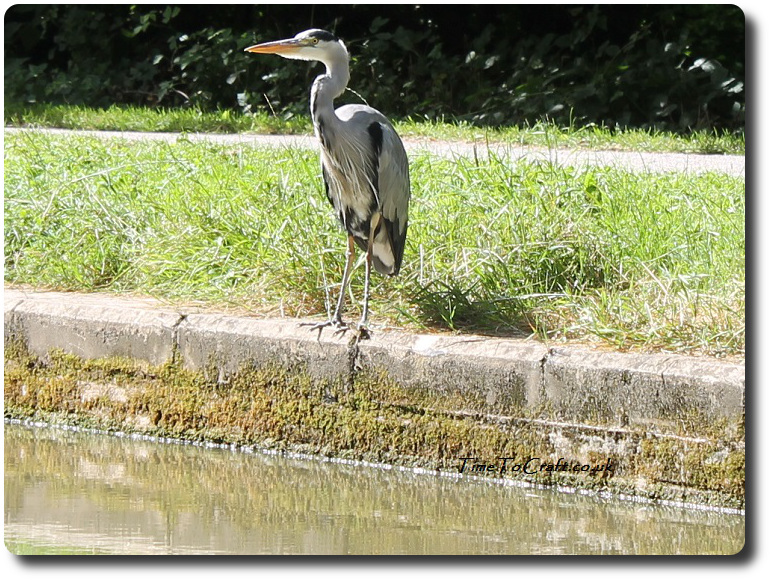 heron on side of canal