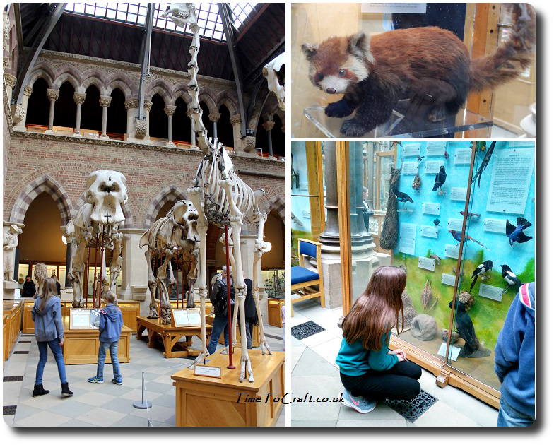 natural-history-museum-in-oxford