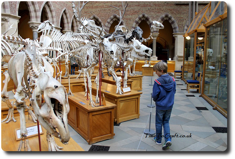 oxford-natural-history-skeletons