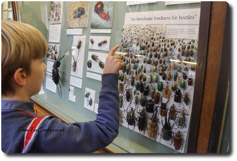 beetle-display-at-oxford-natural-history