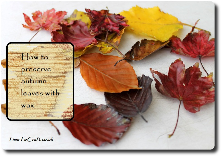 how-to-wax-autumn-fall-leaves