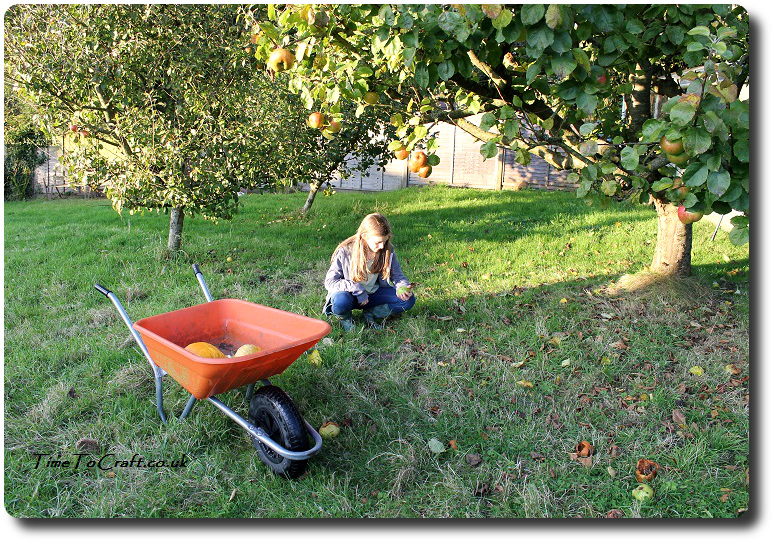 picking-up-windfall-apples