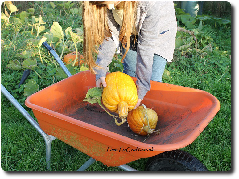 pumpkin-in-the-wheelbarrow