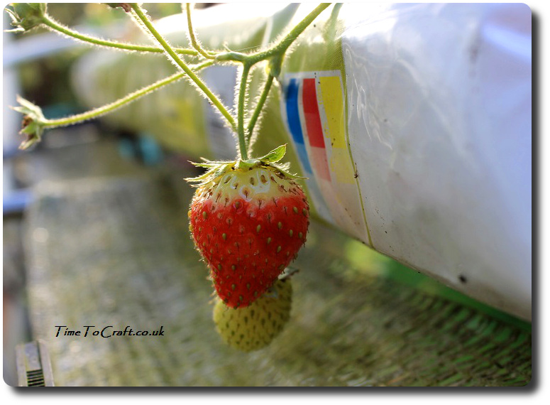 last-strawberry